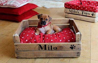 Cama para Perros con cajas de frutas de madera